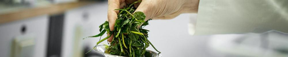 Processing green biomass