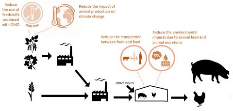 Environmental challenges addressed in Feed-a-Gene